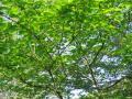 fresh-green005_1024.jpg