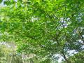 fresh-green006_1024.jpg