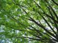 fresh-green014_1024.jpg