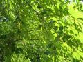 deep-green052_1024.jpg