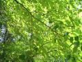 deep-green053_1024.jpg