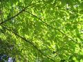 deep-green054_1024.jpg