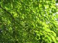 deep-green055_1024.jpg