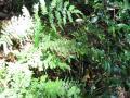 plants009_1024.jpg