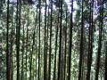 woods003_1024.jpg