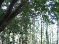 woods004_1024.jpg