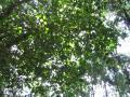 woods005_1024.jpg