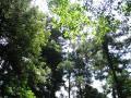woods007_1024.jpg