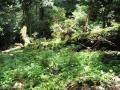 woods009_1024.jpg